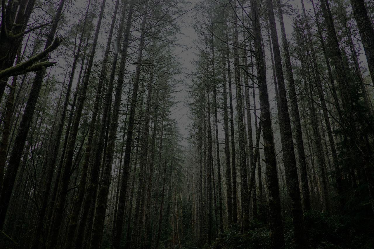 bigforest1